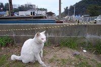shimatetsu0405_6.jpg